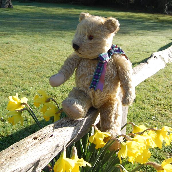A simply delightful 1930 Chiltern teddy bear - the lovely Brunel