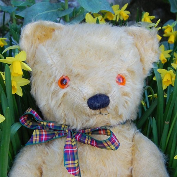 1950s Chad Valley teddy bear in all original condition