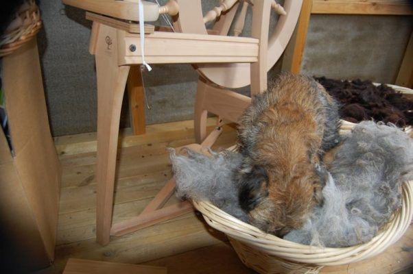 The managing director overseeing the wool quality ...