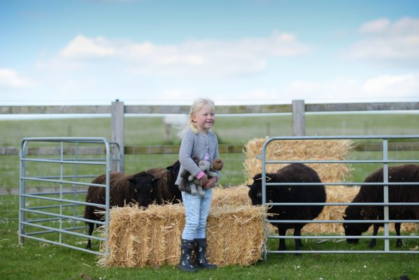 Young shepherdess Jessica introducing the bears to her Black Welsh Mountain sheep