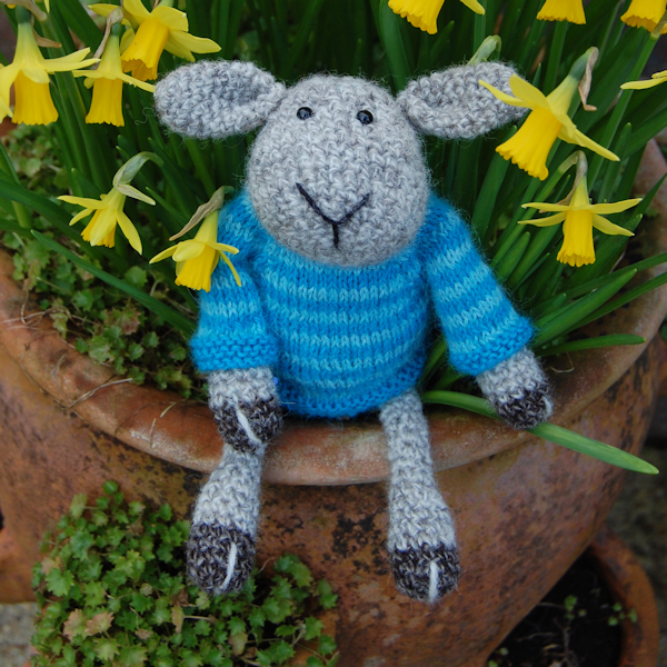 The very cute Seamus sheep admiring the Spring mini Daffs, he is hand crocheted in pure Shetland wool