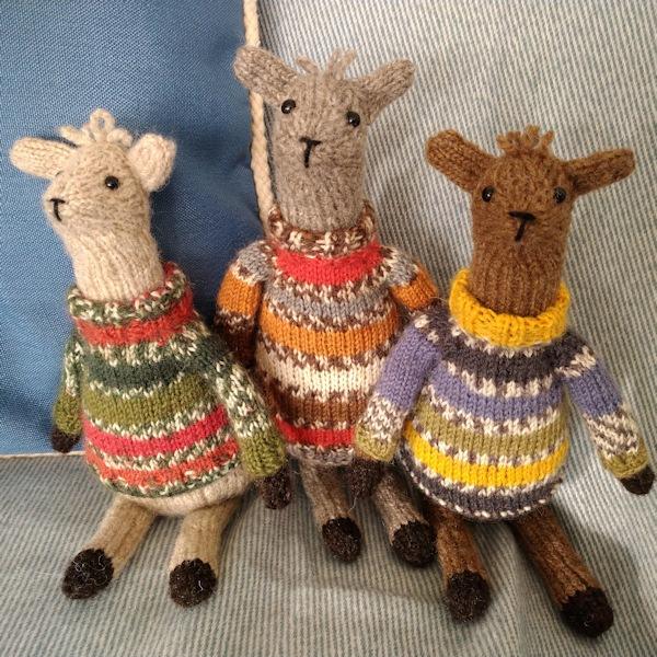 Seriously cute Shetland wool alpacas wearing Fair Isle jumpers!