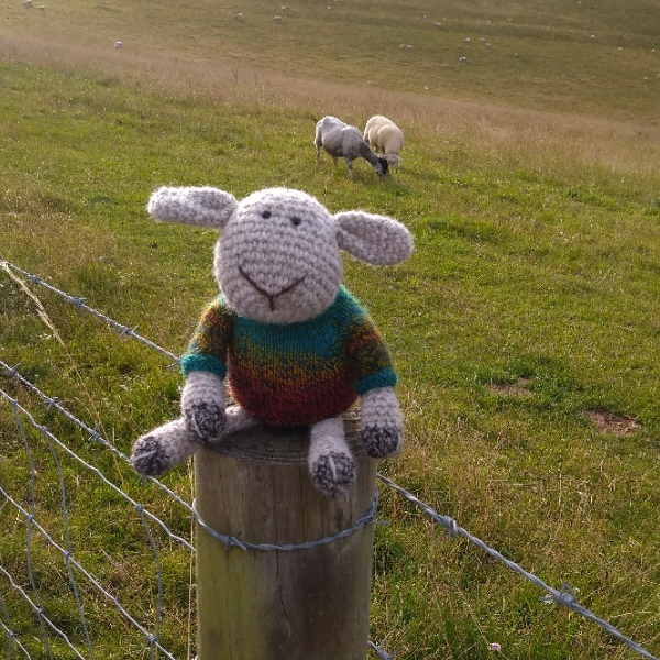 Little hand crochet sheep made from pure North Ronaldsay wool and wearing his hand dyed wool jumper - The Knitted Bear Company